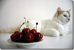 538988_cherries_on_a_plate_1