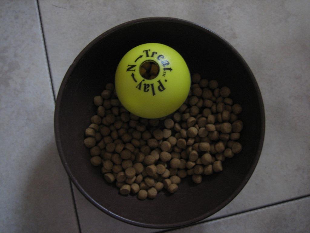Can I Feed My Ferret Dry Cat Food