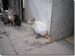 Cairo market cats 2